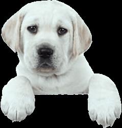 footer_dog